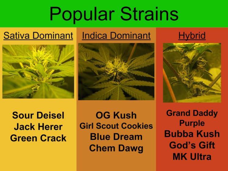 popular strains