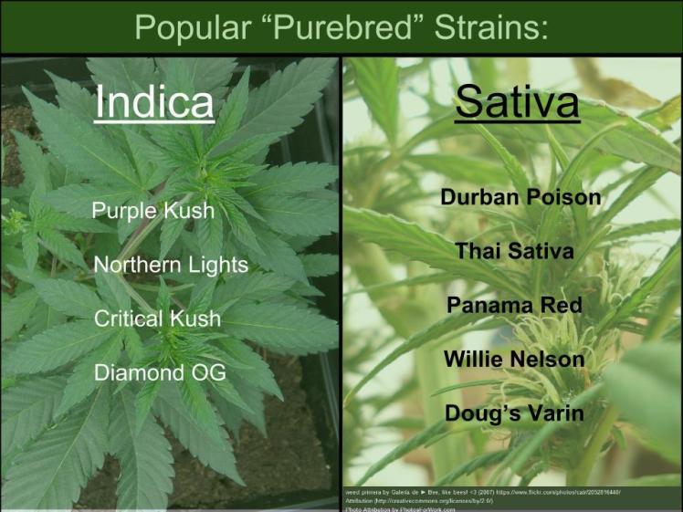 Purebred strains