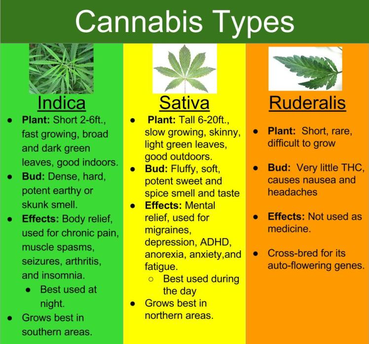 qualities of cannabis
