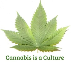 Cannabis Culture Graphic